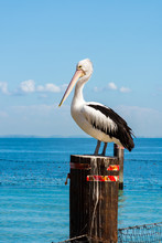 Pelican On A Pole In The Water On A Sunny Day
