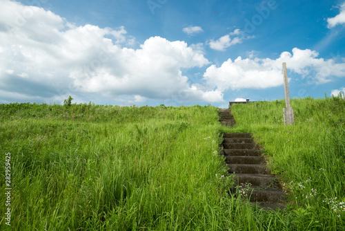 Fotografia, Obraz 青空の下の堤防の草むら