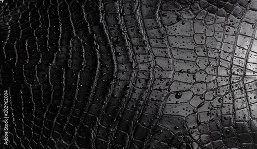 Tuinposter Krokodil black crocodile texture with raindrops