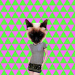 Leinwandbild Motiv Contemporary art collage. Geometric fashion kitty