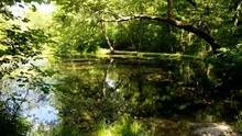 Scenic View Of A Pond In The C...