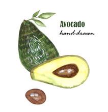 Avocado Watercolor Hand Draw I...