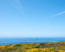 Yellow Flowers On Dursey Island With Blue Ocean And Sky In The Background