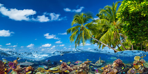 Obraz na Szkletropical island paradise beach with underwater water wve surface with colorful coral reef sea ocean life. shark fish sea turle. vacation nature concept