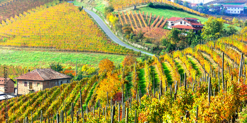 Autumn landscape. scenic countryside of Piemonte with golden vineyards, Italy
