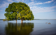 Overflowing Lake Engulfs Trees Due To Climate Change Altering Weather Patterns.