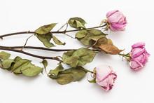 Three Dry Pink Roses