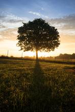 Single Tree At Sunrise.