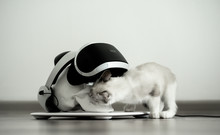 White Skull On A Stand In A VR Helmet. Gray Cat Digital Concept.