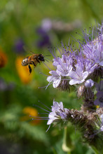 Wasp Landing And Pollination V...
