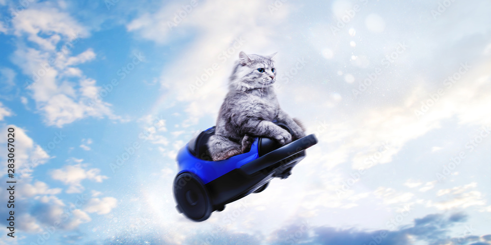 Fototapety, obrazy: Cute gray cat in toy car flying on blue sky background. Follow your dream concept.