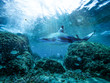 Leinwanddruck Bild Underwater ocean background with a shark