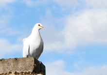 A White Dove Of Peace Perched On A Building With A Blue Sky Backdrop With Copyspace