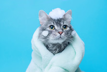 Funny Wet Gray Tabby Cute Kitt...