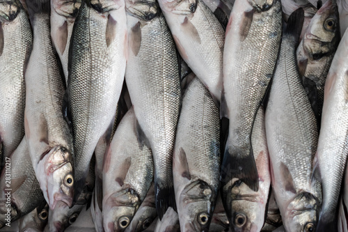Sea Bass fish. Canvas-taulu