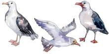 Sky Bird Seagull In A Wildlife...