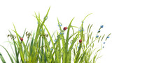 Grass In Droplets Of Morning And A Ladybug In Summer Spring On A Nature   Macro. Drops Of Water On The Grass, Natural Wallpaper, Panoramic View,   Soft Focus, Render 3d