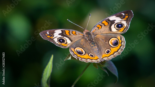 Butterfly clinging to a flower