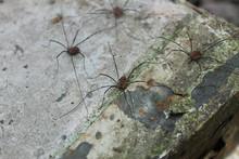 Woodland Spiders