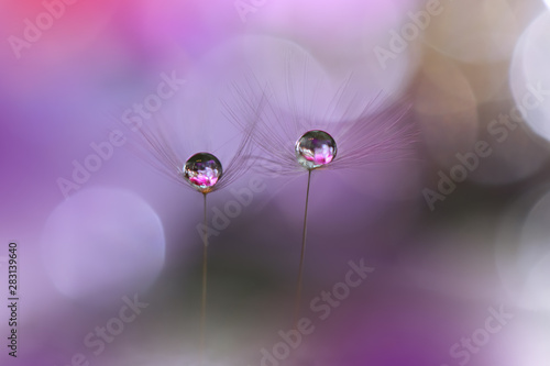 Fotobehang Macrofotografie Macro Photography.Floral abstract pastel background with copy space.Dandelion flower in soft style.Violet Nature Background.Blurred space for your text.Tranquil nature closeup view.Water Drops.Violet