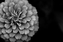 Black And White Flower Macro. ...