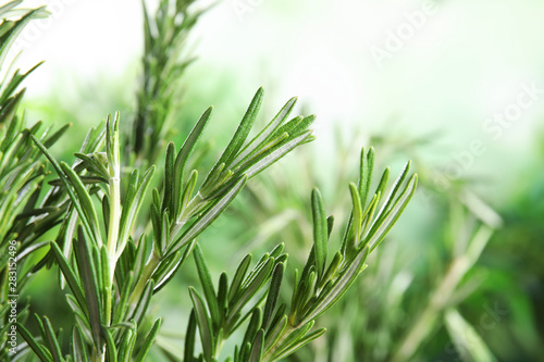 Branches of fresh rosemary on blurred green background, space for text
