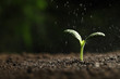 Leinwandbild Motiv Sprinkling water on green seedling in soil, closeup. Space for text