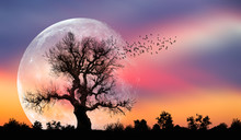 "Silhouette Of Birds With Lone Tree In The Background Big Full Moon At Amazing Sunset ""Elements Of This Image Furnished By NASA"""