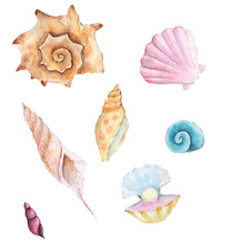 Watercolor Seashells On White Background Hand-drawn Illustration. Marine Shells In Pastel Colors. Watercolour Summer Vacation Design Elements. Watercolor Sea Shells Clipart.