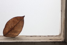 Brown Leaf In The Ring