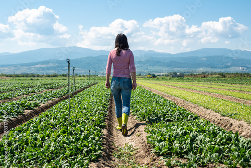 Photo sur Toile Les Textures Woman with green boots walking on spinach field.