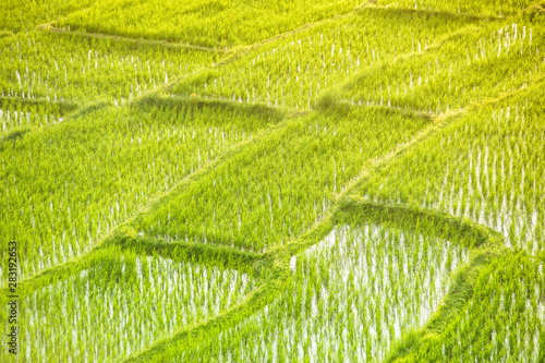 Foto auf Gartenposter Reisfelder Terraced rice field in the morning with sunlight