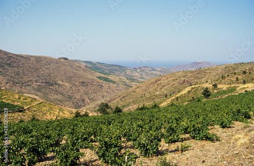 vignoble, appellation d'origine controlée, Banyuls, 66, Pyrénées Orientales Canvas Print