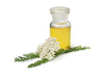 Fresh Common Yarrow Flowers And A Bottle Of Oil