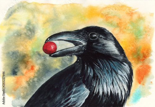 Watercolor picture of a black raven with red berry in its beak Fototapeta