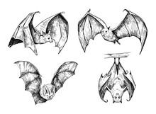 Bat Sketch. Hand Drawn Illustr...