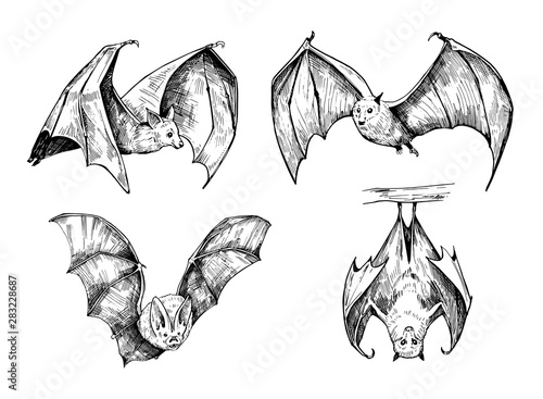 Billede på lærred Bat sketch. Hand drawn illustration converted to vector
