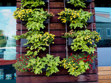 Vertical Plants Garden Hanging On A Wooden Pallet With A Cement Wall On The Back