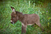 Donkey On Green Grass