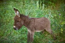 Donkey On Green Grass