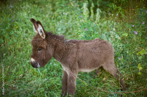 Tableau sur Toile donkey on green grass