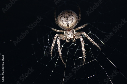 Canvas Print Spider