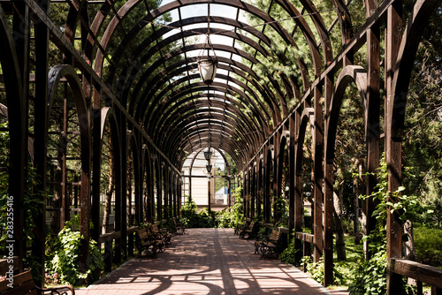 green leaves on trees and plants near metallic arch and walkway Wallpaper Mural