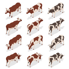 Isometric Dairy Cattle Set. Co...