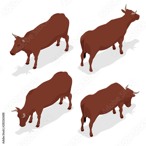 Fotomural Isometric dairy cattle set