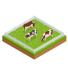 Isometric Brown And White Cows...