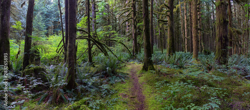 Beautiful green trees coved in moss during a vibrant summer day. Taken in Golden Ears Provincial Park, Maple Ridge, Greater Vancouver, British Columbia, Canada.