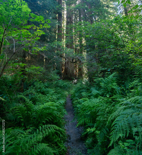 The majestic Redwood Forest, where are the fairies?