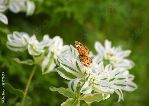 Butterfly in a Flower Garden