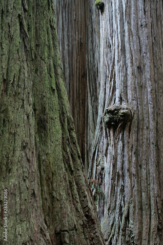 Natural Abstractions deep in the rainforest Canvas-taulu